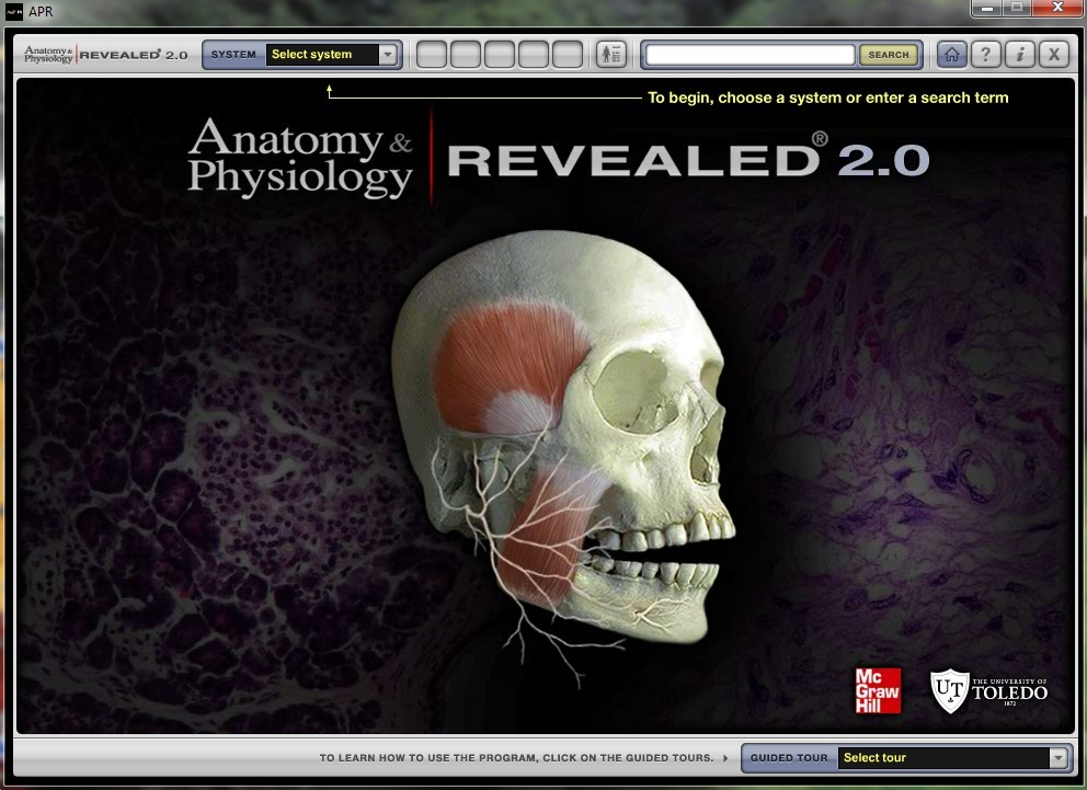 Perfect Apr Anatomy And Physiology Elaboration - Anatomy And ...